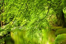 Free Trees At The River Stock Images - 15973764