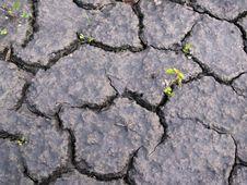 Free Drought Stock Photos - 15974053