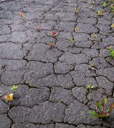 Free Drought Stock Images - 15974074