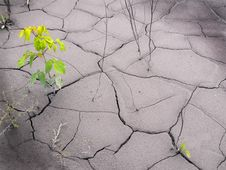Free Drought Royalty Free Stock Photography - 15974227