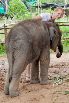 Teenager With Baby Elephant Royalty Free Stock Photography