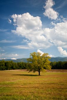 Lonely Oak Tree Landscape In Cades Cove Field Stock Image
