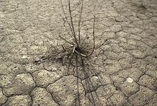 Free Drought Stock Image - 15975671