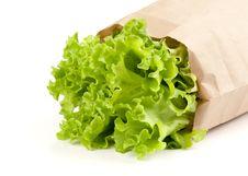 Free Fresh Salad Lettuce Stock Images - 15976104