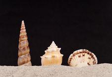 Free Three Protruding Shells On Sand Stock Photos - 15977673