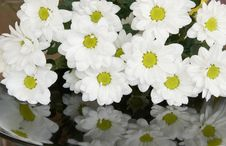 Free Bouquet Of White Chrysanthemums Stock Images - 15978374