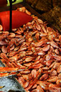 Free Fresh Shrimps In A Fish Market Stock Photos - 15980223
