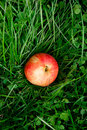 Free Red Apple On Green Grass Stock Photos - 15988723