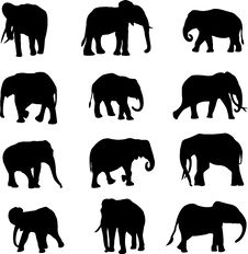Free The World S Three Kinds Of Elephants Stock Photo - 15982400