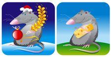 Free Mouse Rat Stock Photos - 15984033