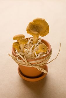 Free Chanterelles In A Pot Stock Photo - 15984530