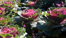 Free Flower Royalty Free Stock Image - 15985336