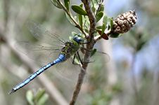 Free Blue Dragonfly Stock Image - 15985431