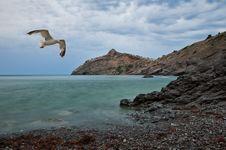 Free Seagull Stock Image - 15986271