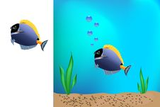 Free Blue Fish Royalty Free Stock Images - 15987719