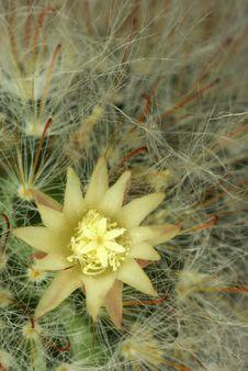 Free Cactus Stock Photos - 15988343
