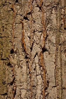 Free Old Wood Texture Stock Photo - 15988700