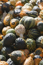 Free Pumpkin Royalty Free Stock Photo - 15990315