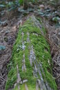 Free Moss On Log Royalty Free Stock Photography - 15990727