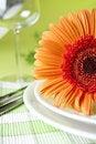 Free Orange Flower Royalty Free Stock Images - 15997999
