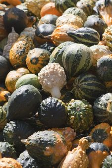 Free Pumpkin Royalty Free Stock Photo - 15990315