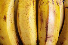 Free Banana Bunch Royalty Free Stock Photo - 15993645