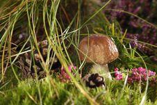 Free Mushrooms Stock Photos - 15994453