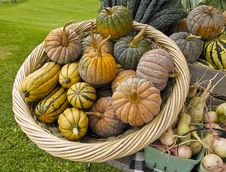 Free Organic Squash At Farmers Market Royalty Free Stock Image - 15997426