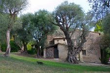 Free Old Farm With Olive Trees Stock Photos - 15997763