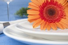 Free Orange Flower And Plates Stock Images - 15998024