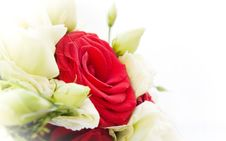 Free Red Rose Stock Photography - 15998562