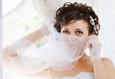 Free Bride In Window Royalty Free Stock Photography - 15998587