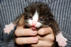 Free Kitten In Hand. Royalty Free Stock Image - 15998716