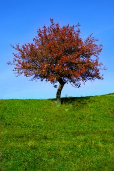 Free Lonely Tree Royalty Free Stock Image - 15998956