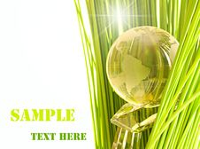 Free Glass Globe In Fresh Green Grass. Royalty Free Stock Photo - 15999465