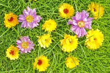 Free Spring Meadow Royalty Free Stock Photo - 15999565
