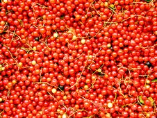 Free Currants 2 Royalty Free Stock Images - 160079