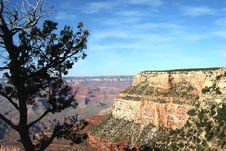Free Canyon Tree Stock Photography - 161232