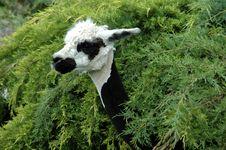 Free Llama Stock Image - 161371