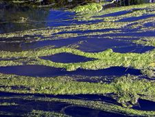 Free River With Duckweed Stock Photography - 162002