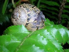 Free Snail Stock Photography - 162922