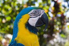 Free Parrot Stock Photos - 163043