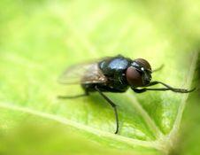 Free Fly......(1) Stock Photo - 164440