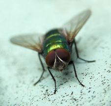 Free Fly......(2) Stock Image - 164441