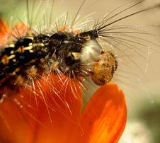 Free Caterpillar...(2) Stock Photo - 164470
