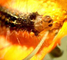 Free Caterpillar...(3) Stock Image - 164471