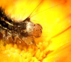 Free Caterpillar...(5) Stock Photos - 164473
