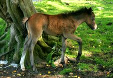 Free The Foal Stock Photography - 165282