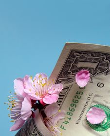 Free Cherry Flowers And Dollar Bill Stock Photos - 166323