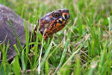 Free Turtle S Eye Royalty Free Stock Photography - 168407